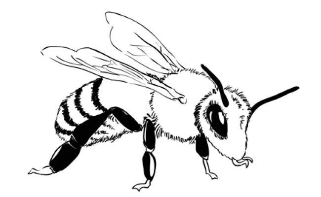 How to Draw a Bee – Sketchbook Challenge 1