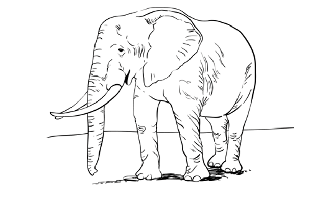 How to Draw an Elephant – Sketchbook Challenge 4
