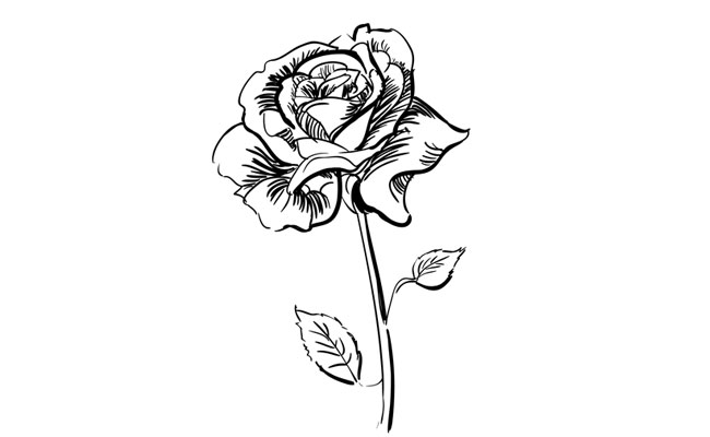 How to Draw a Realistic Rose  – Sketchbook Challenge 10
