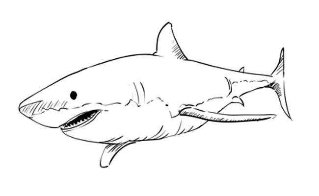 How to Draw a Great White Shark – Sketchbook Challenge 14