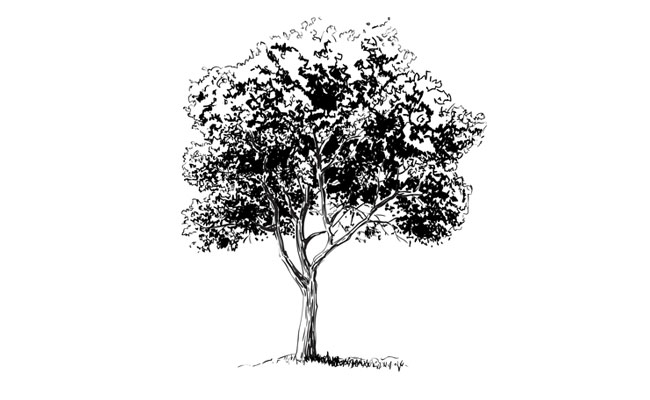 how to draw a realistic tree sketchbook challenge 11