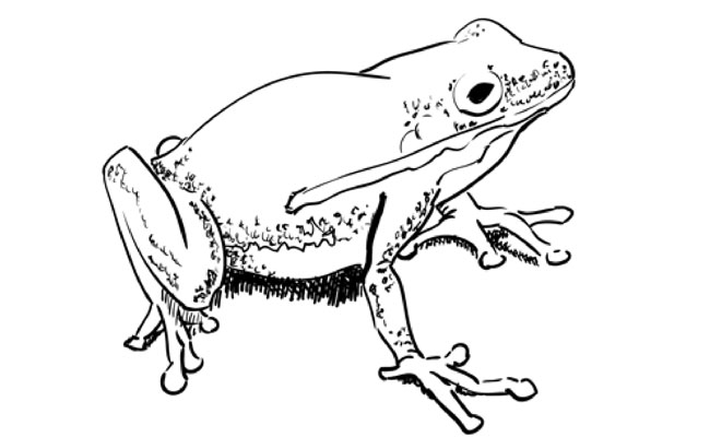how to draw a frog sketchbook challenge 18