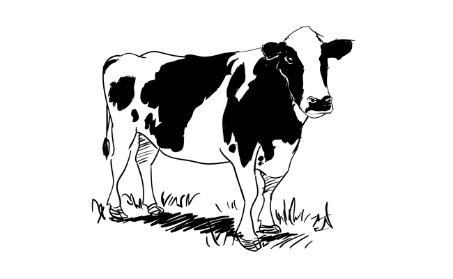 How to Draw a Cow – Sketchbook Challenge 31