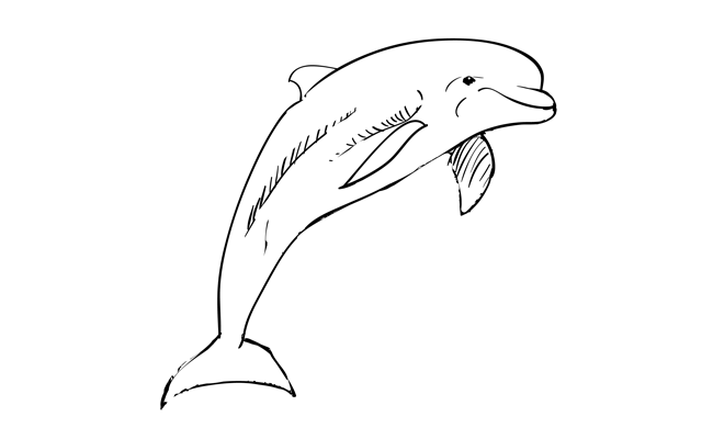 How to Draw a Dolphin – Sketchbook Challenge 32