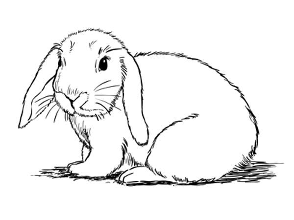 Line Drawing Bunny : How to draw a bunny sketchbook challenge