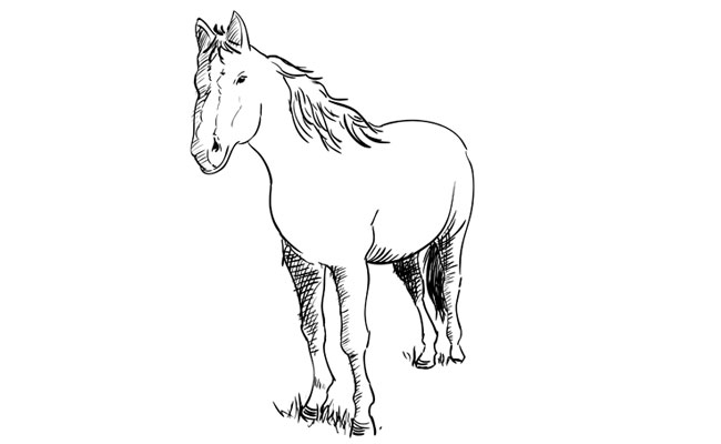 How to Draw a Horse – Sketchbook Challenge 38