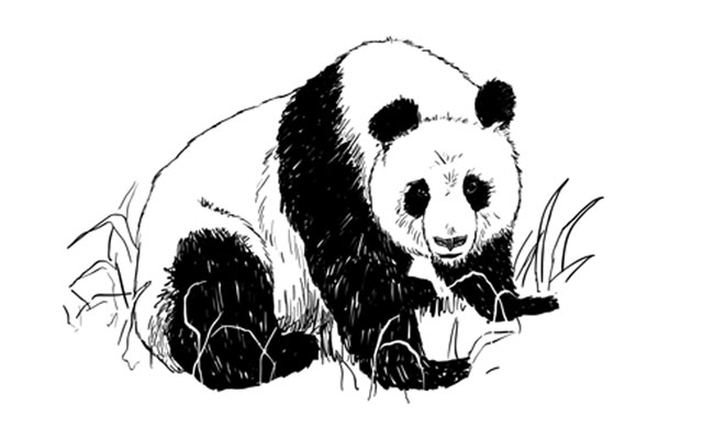 How To Draw A Realistic Panda