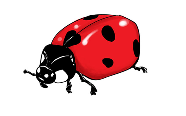 How to Draw a Ladybug – Sketchbook Challenge 44