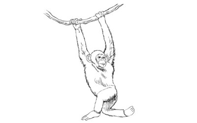 Sketchbook Challenge 45 – How to Draw a Monkey