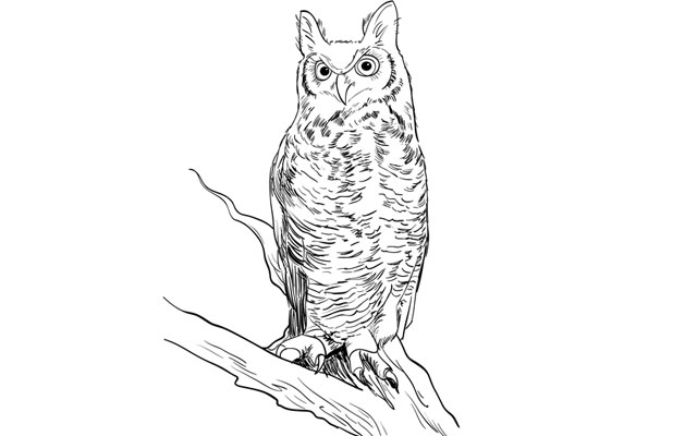 How to Draw a Realistic Owl