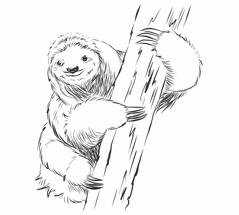 How to draw a sloth step seven