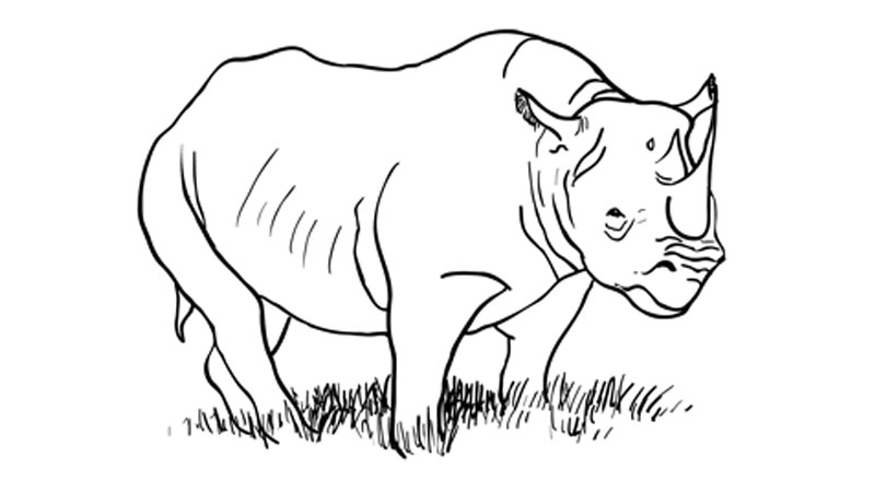 How to draw a rhinoceros learn
