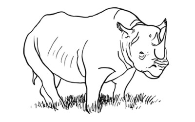 Step By Step Animal Drawing Tutorials